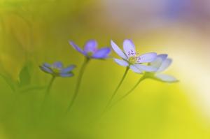 05 Blumenträumerei, Gerald Haas